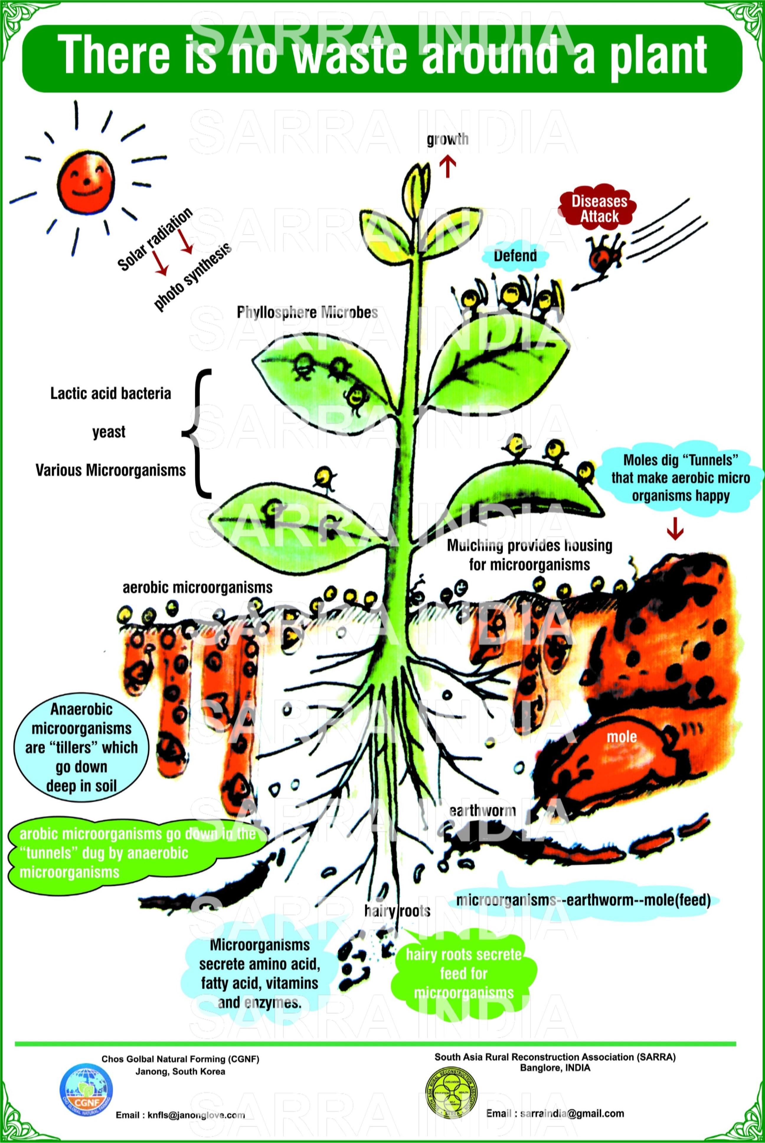 Cho S Global Natural Farming
